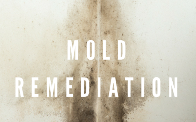 What You Need To Know About Mold Remediation