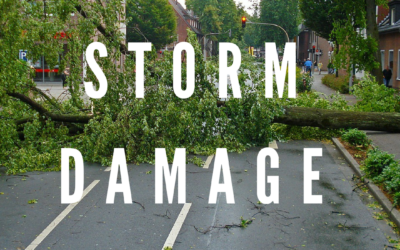 How To Deal With Storm Damage: Part 2