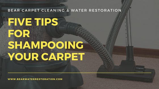 Five Tips For Shampooing Your Carpet